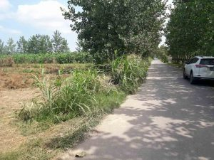 فروش زمین مسکونی در طرح هادی 16000 متر کیاشهر