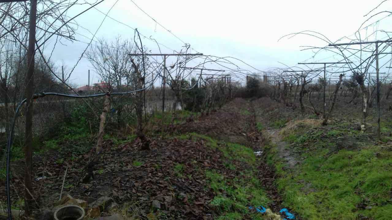 فروش زمین باغ کیوی 7000 متر سنددار رودسر