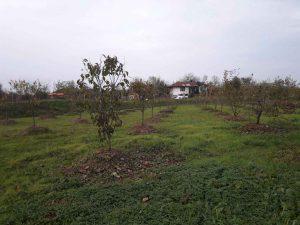 فروش باغ خرمالو 30000 متر رانکوه