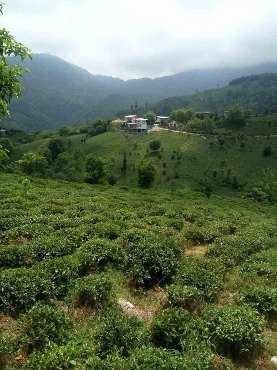 فروش زمین مسکونی 660 متری ارتفاعات رانکوه