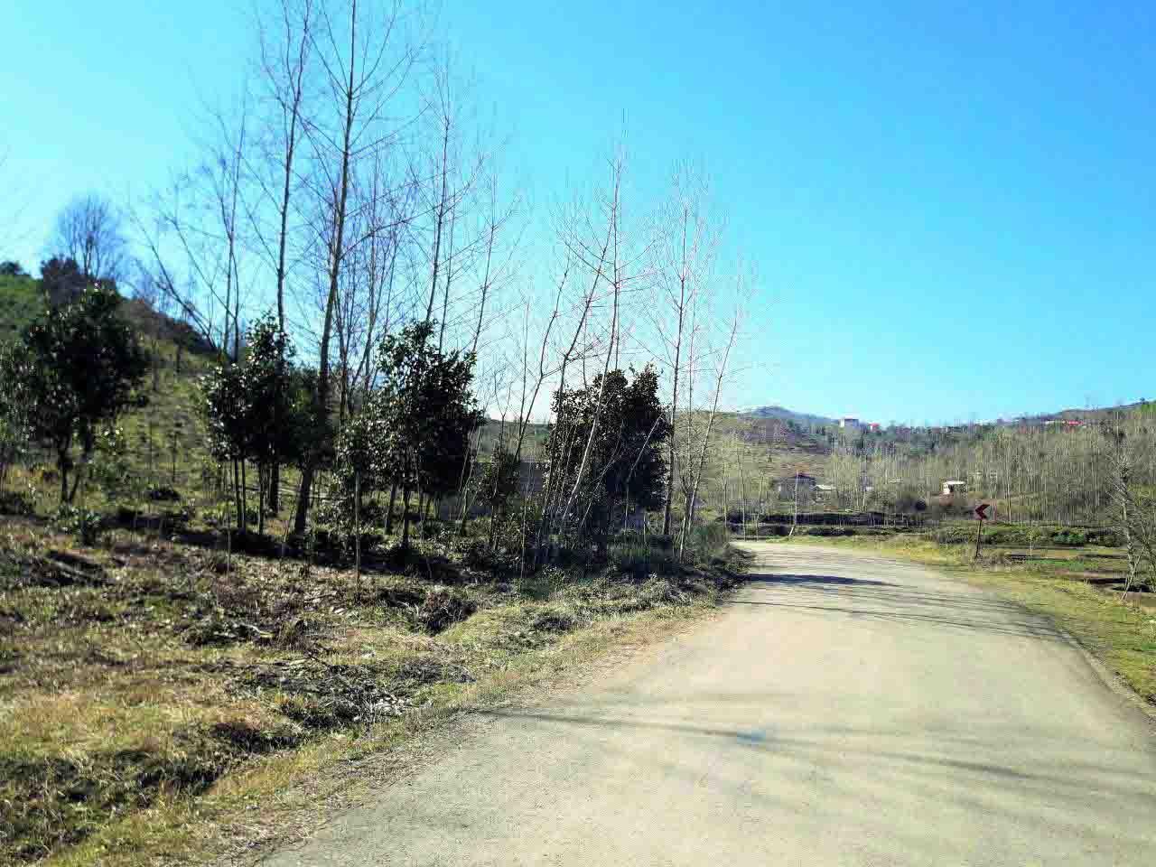 فروش زمین 9 هزار متر جنگلی اطاقور