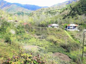 فروش ویلا باغ سنتی 4000 متر اطاقور