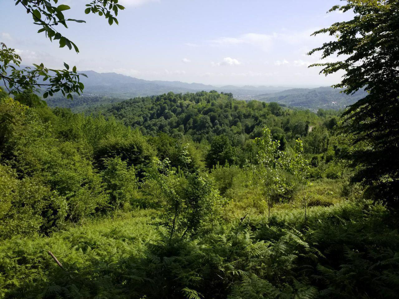 فروش زمین جنگلی 7000 متر اطاقور