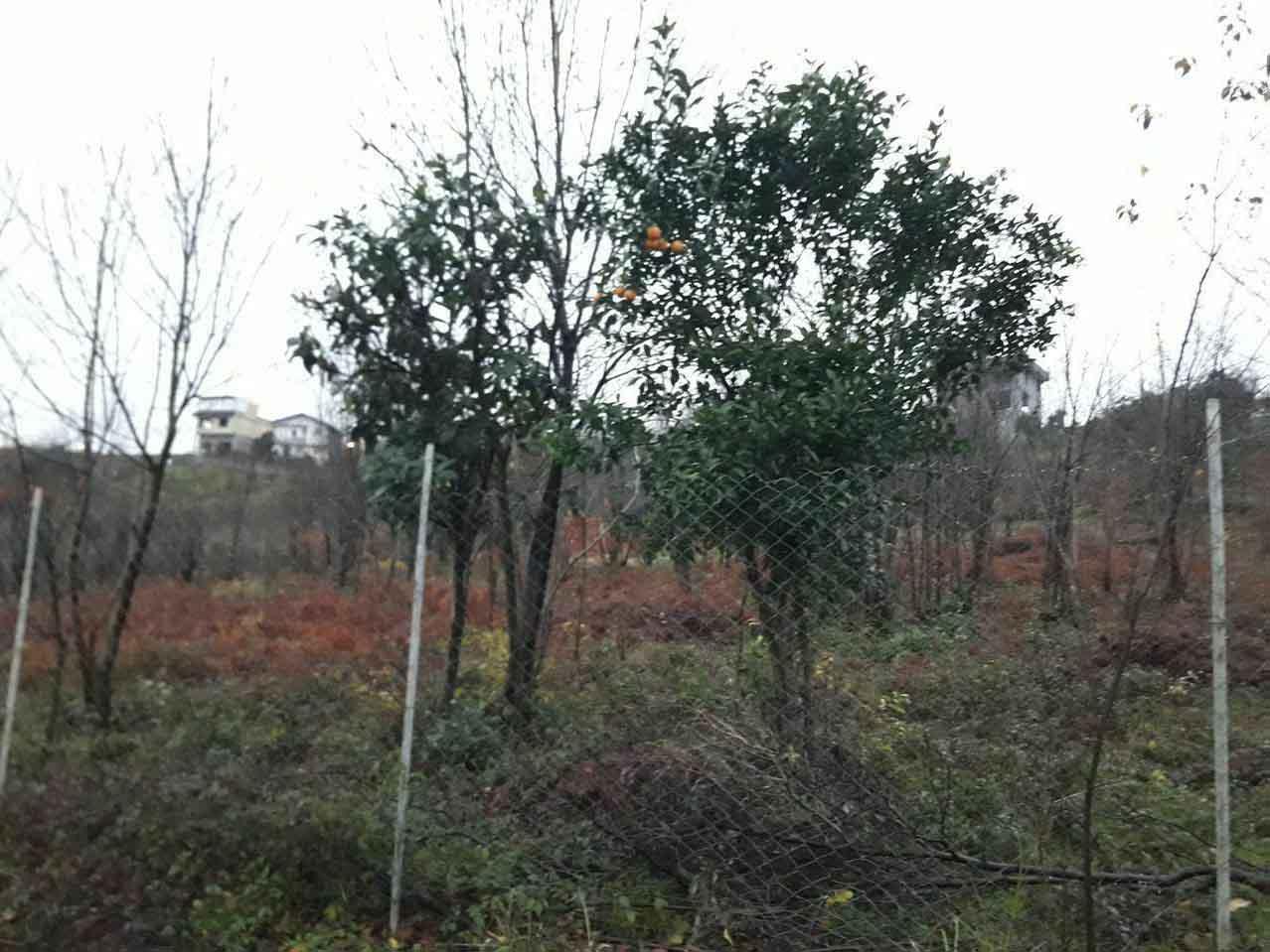 فروش زمین ۲۴۴۰ متری طرح هادی ارتفاعات روستای اکبرسرا اطاقور